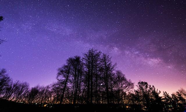 Trees Below The Milky Way