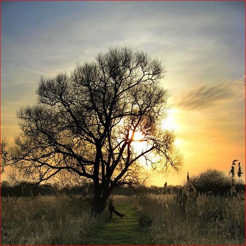 sunset england norfolkbroads surlingham wheatfennaturereserve