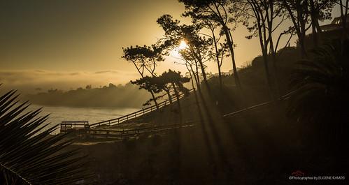 california fog sunrise sandiego lajolla southerncalifornia lajollacove