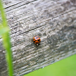 The world of the Ladybug