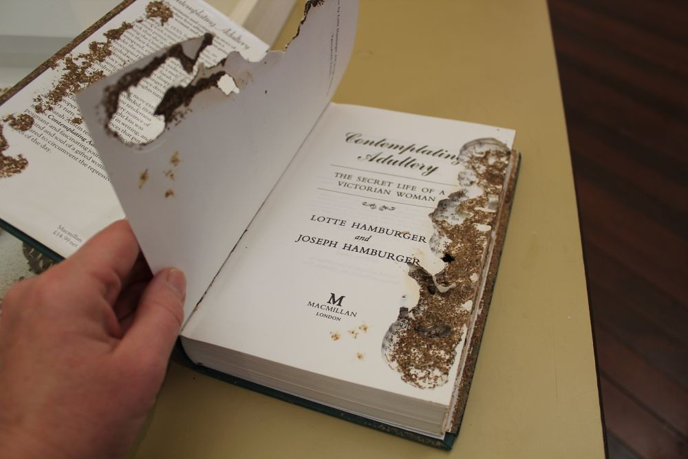 biological deterioration of Library materials