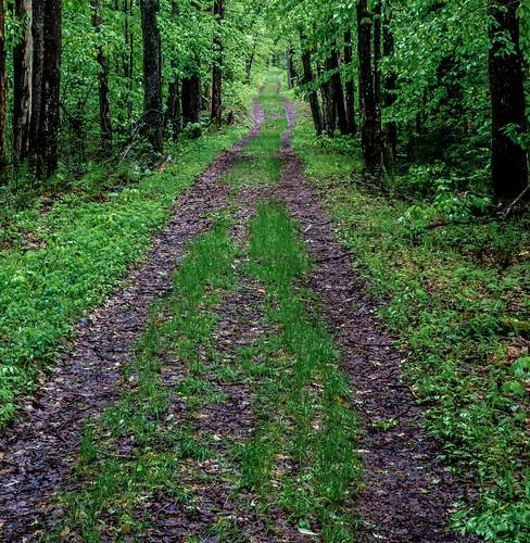 newyork unitedstates hiking adirondacks trail sentier adirondack thendara woodhull firetowerchallenge photomakak