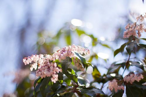 JMU Arboretum - a plant-lovers dream
