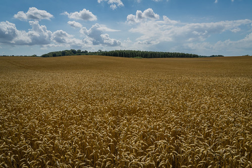 blue trees sky green yellow clouds day cloudy sweden wheat harvest hills explore fields ripe skånecounty