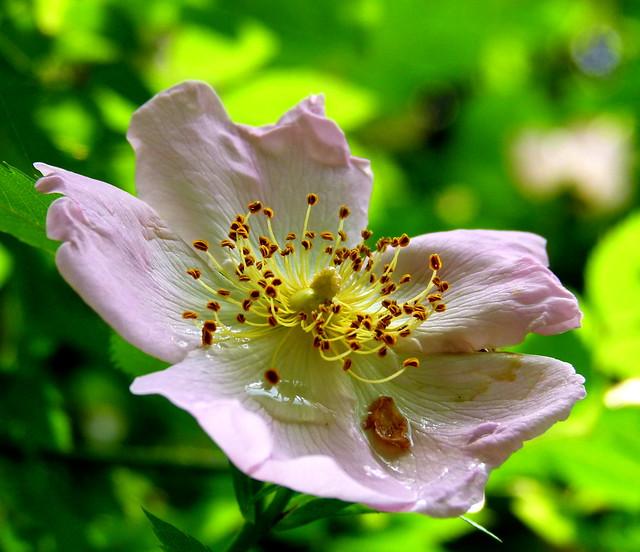 Opengevouwen bloem