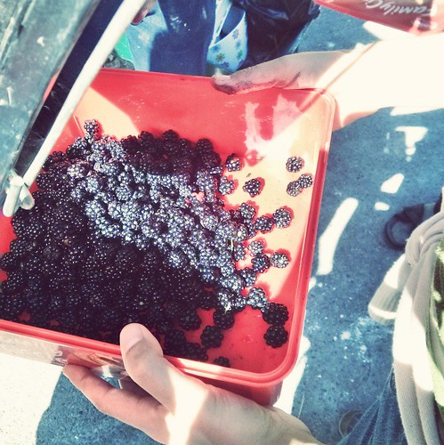 Box of berries | by Amber Fjord