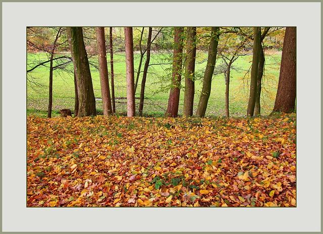 Der Wald wird wieder durchsichtig (Forest becomes translucent again)