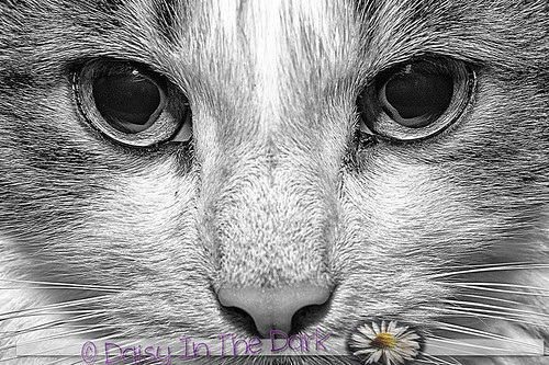 Cats Eyes   by Daisy Sparkles old account