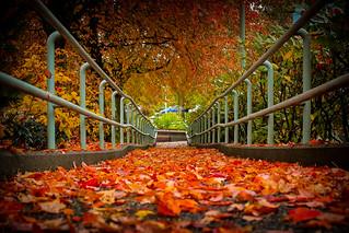 Leaf Strewn Path | by alex_critch