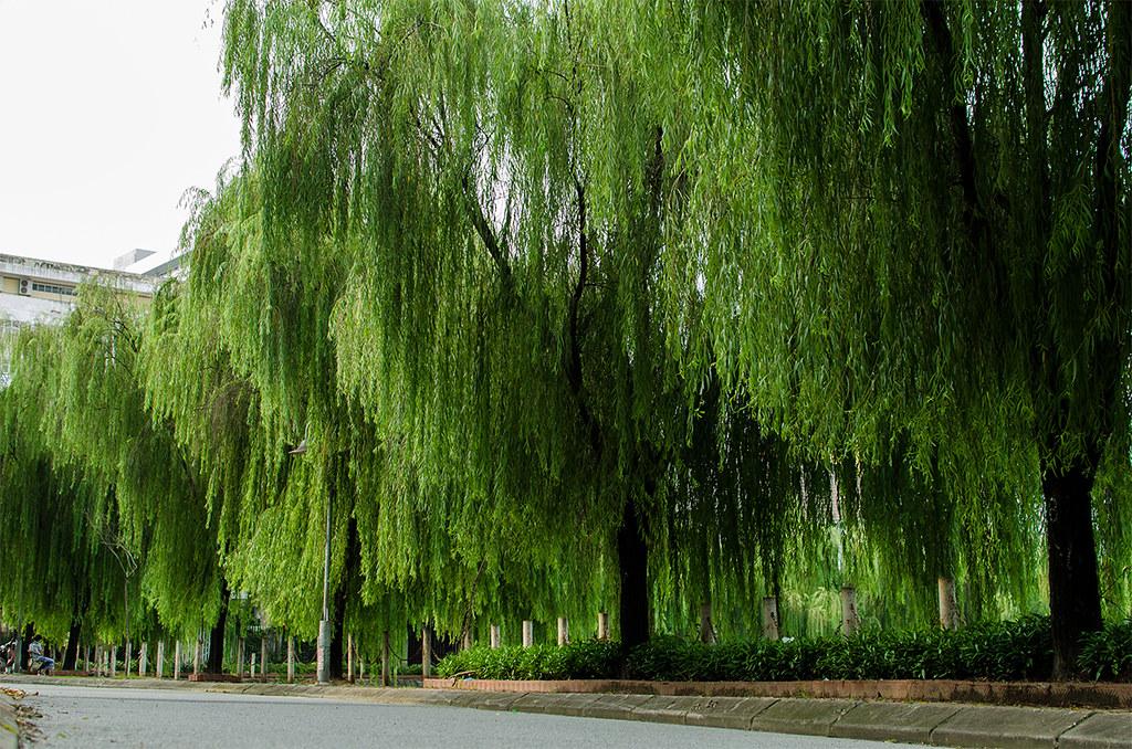 Hang Liễu ở Hồ Văn Quan Nature Gradient Tuấn Keeper Flickr