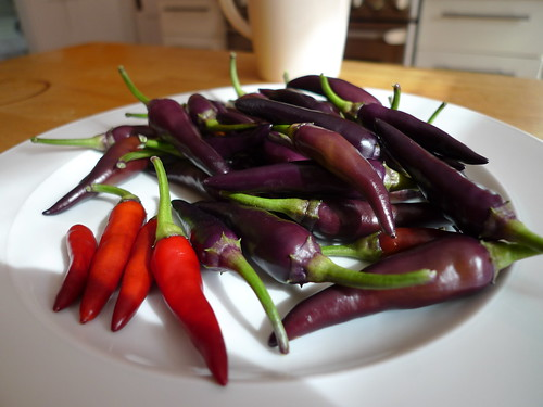 Purple Cayenne Peppers | by meegz
