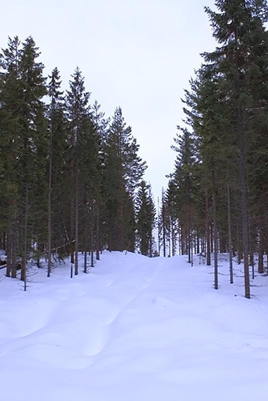 Forest Track, Jädra Ås, Sweden