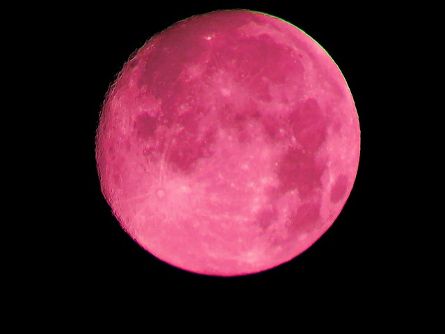 The Full Blood Moon or The Full Buck Moon - 100% illuminated - 1.6x converter - ~ 100 x zoom - SX60