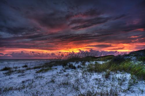 beach gulfofmexico florida coastaldunes graytonbeachstatepark