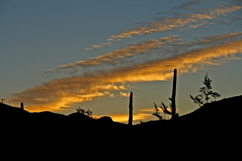arizona tucsonarizona mountains cactus cloudsandsky clouds cloudsandmountains sky sunrisephotography sunrise desert sonoradesert earlymorning cloudsstormssunsetssunrises