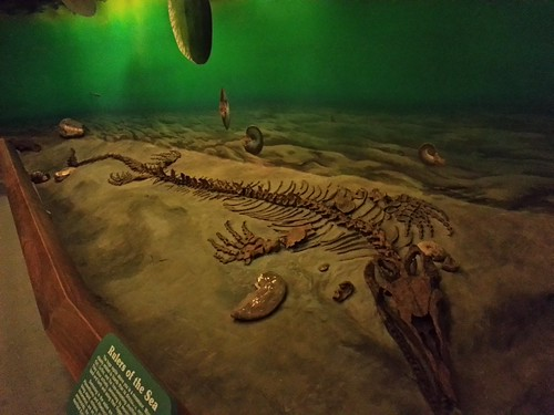 Mosasaur skeleton | by Nicolas Demers