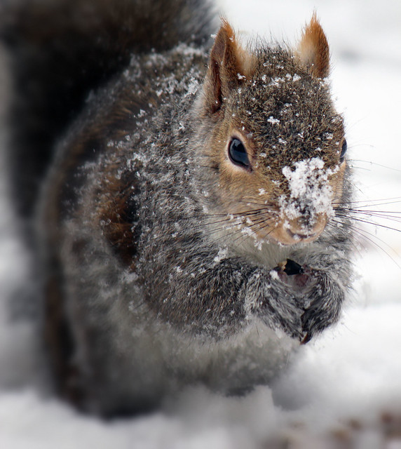 Snowing again!
