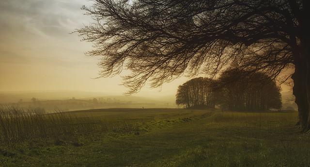 Ridgeway woodland