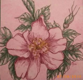 alberta rose art 4