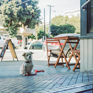 #lonelydogchronicles: Hasselblad Edition | by Maykel Loomans