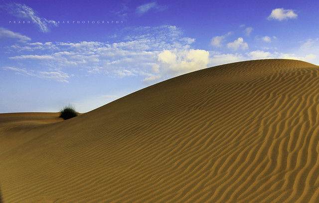 Sand Dunes Of Thar