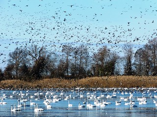 A mixed flock - 9 | by USFWS/Southeast
