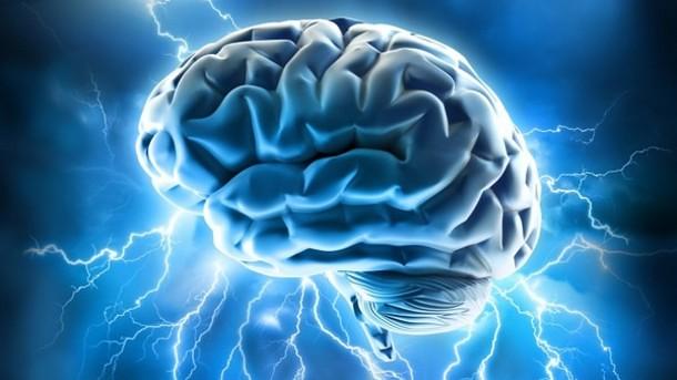 brain 19