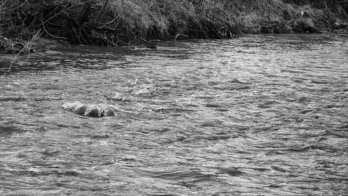 Mimico Creek 03 | by Michael A. Garstin