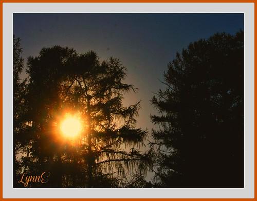 trees sky sunsetting ngc