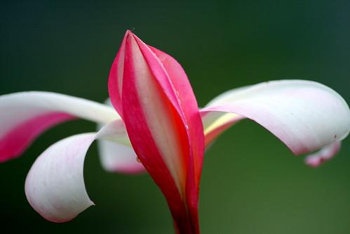 Natures Magic | by Rajeev K