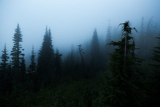 Mist of Paradise | by mhitchner1
