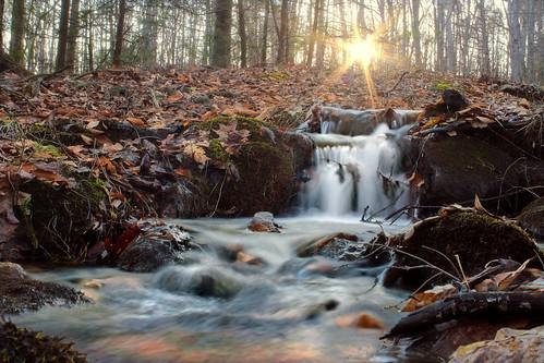 Ontelaunee Creek Tributary (1) | by Nicholas_T