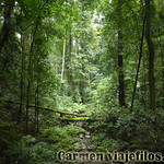 07 Viajefilos en Australia. Dorrigo Rainforest NP 12