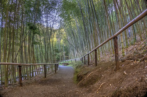 california garden raw path saratoga bamboo fav30 hdr hakonegardens 3xp photomatix bamboogarden nex6 selp1650