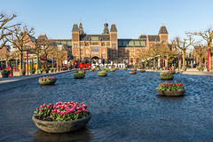 Meeting the spring in Amsterdam