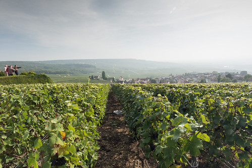 The Champagne Vinyards of Hautvillers | by G Bayliss