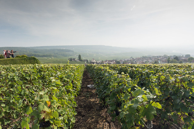 The Champagne Vinyards of Hautvillers
