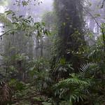 07 Viajefilos en Australia. Dorrigo Rainforest NP 24