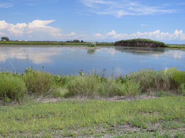 Monte Vista Wetland