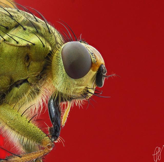 Fly Profile Macro