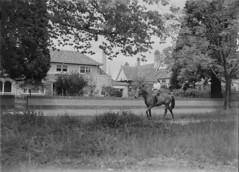 Sturt St West with horse