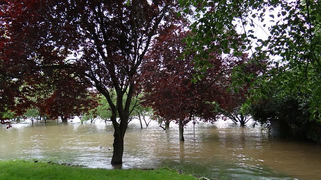 Das Hochwasser in Dresden selbst dabei als Hauptperson komme ich, komme gegen Morgen, ganz gewiß, mein Freund, auf deine Stube, angelehnet ließ ich meine Türe, hatte wohl die Angeln erst geprüfet und mich recht gefreut, daß sie nicht knarrten weckte mich von meinem leisen Schlummer. 0102