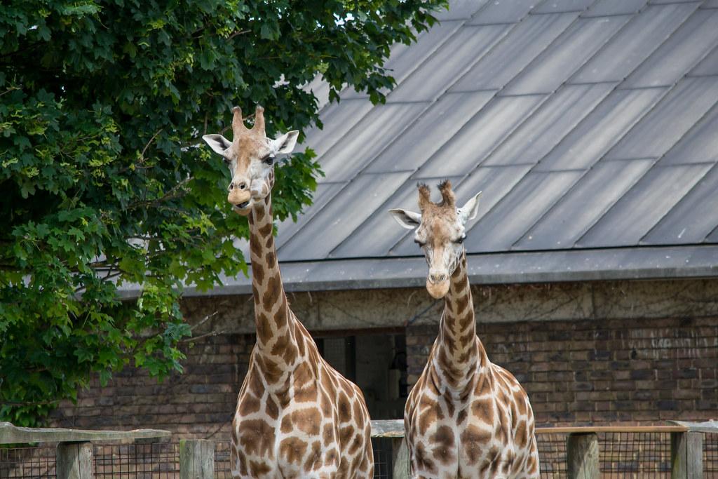 London Zoo-080613-0141