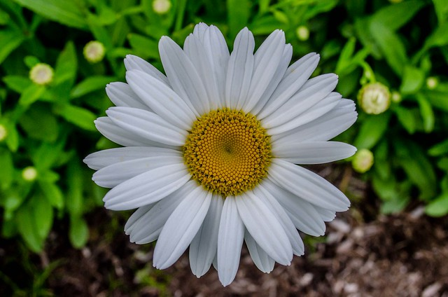 Flower in high contrast