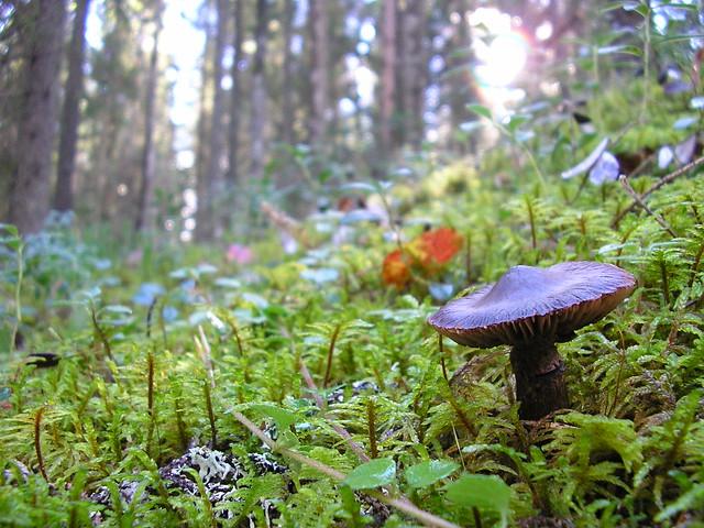 Seta en un bosque
