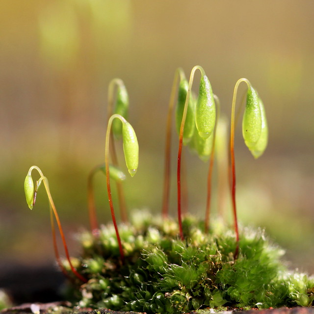 the beauty of moss