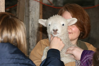 Lamb | by Virtualdistortion