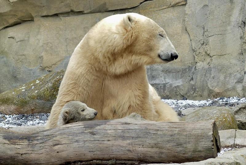 Polarbear Valeska und Lale
