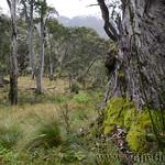 02 Viajefilos en Australia. Barrington NP 29