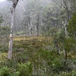02 Viajefilos en Australia. Barrington NP 16